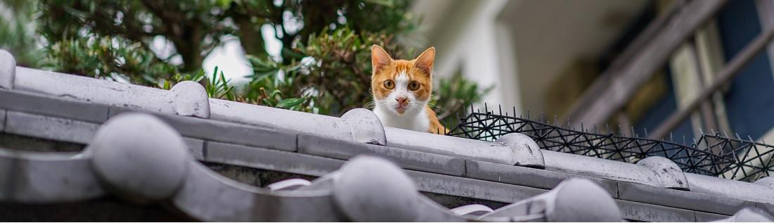 Beste kattenverjager