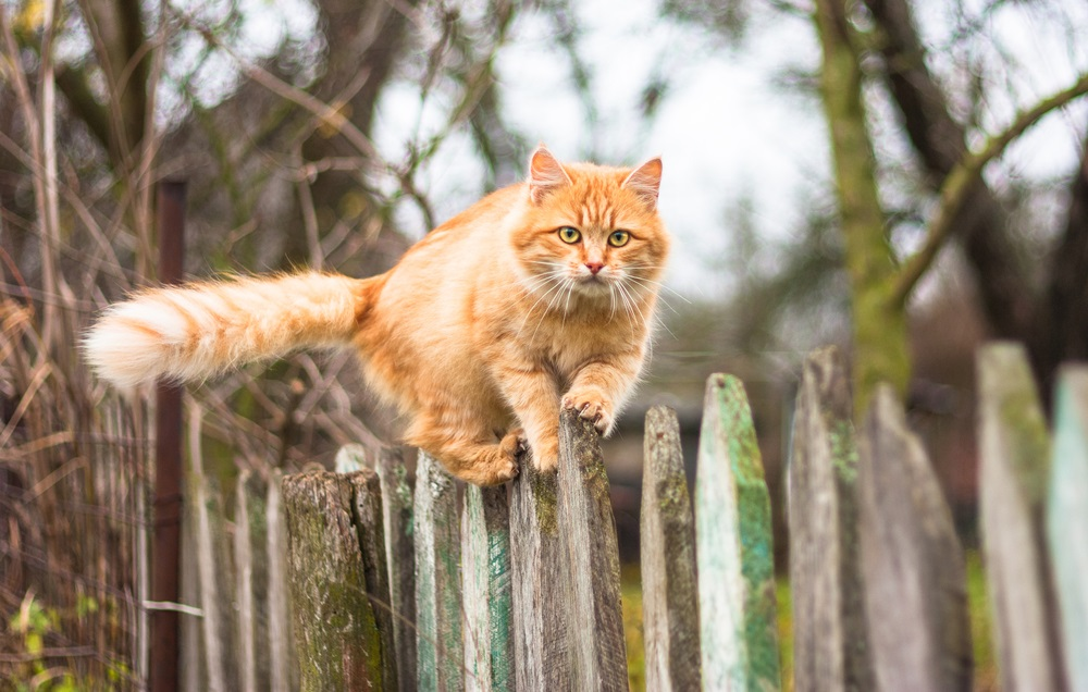 Kattenverjager beste