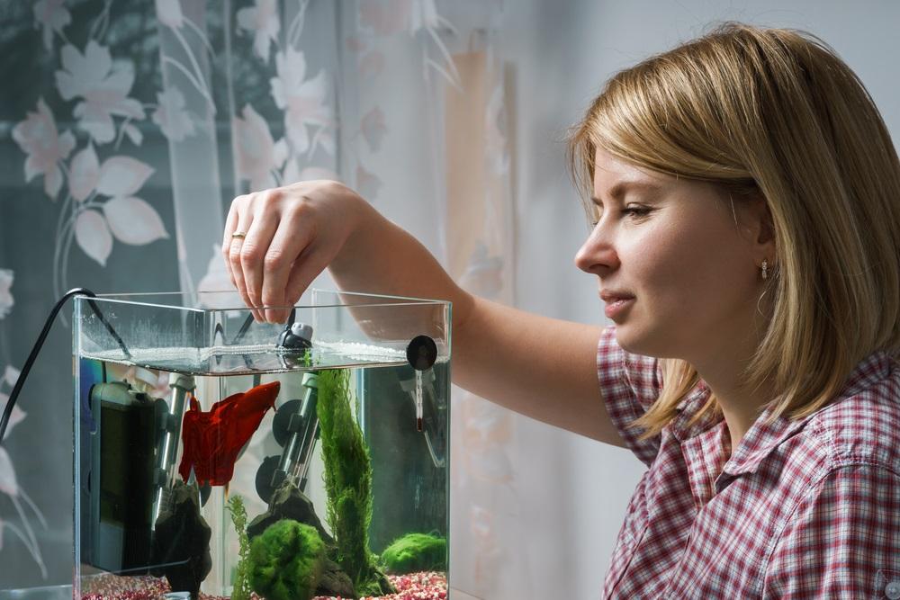 Visvoer aquarium beste